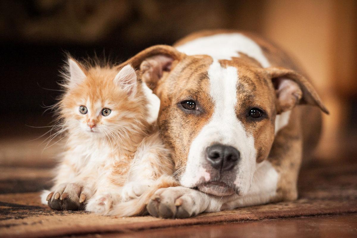 dogcat 031021