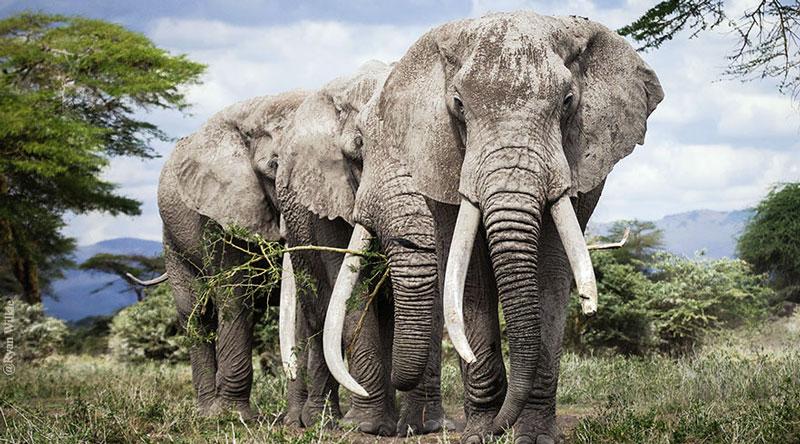 elephants 081518