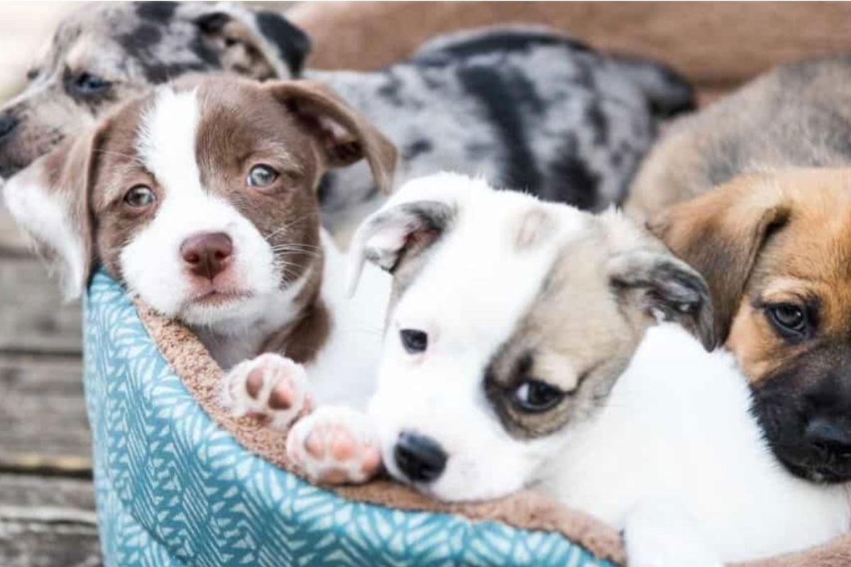 puppies 083021